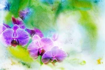 Abstract watercolor illustration of blossom phalaenopsis orchid.