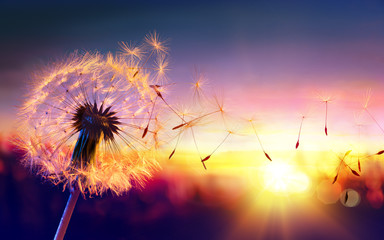 Wall Mural - Dandelion To Sunset - Freedom to Wish