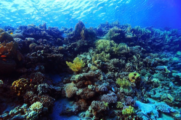 coral reef underwater photo