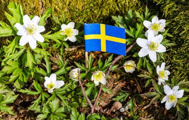 Traditional Swedish spring flowers