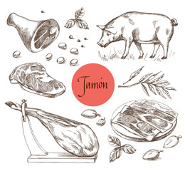 Jamon set. Black Iberian Pig, Jamon, Meat, Beef, spices for meat. Vector illustration in Vintage engraving style. Can be used for menu illustration, label or sticker image. Isolated