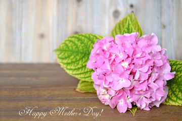 Happy Mother's Day card with hydrangea flower