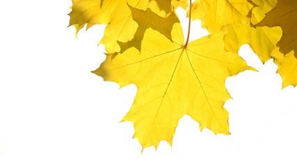 Autumn leaves close-up