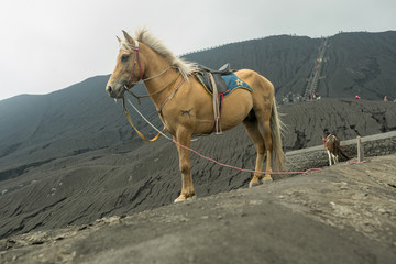 Horse in front of mountains near  Volcano Bromo