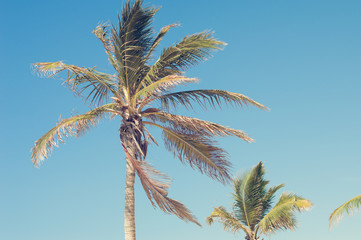 Horizontal photo of a palm tree and blue sky, retro style
