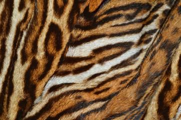 Photo sur Toile Les Textures tiger fur background texture