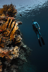 Wall Mural - The Red Sea