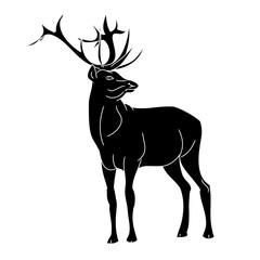 Forest fallow deer 3