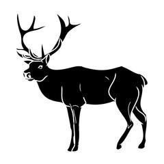 Forest fallow deer 4