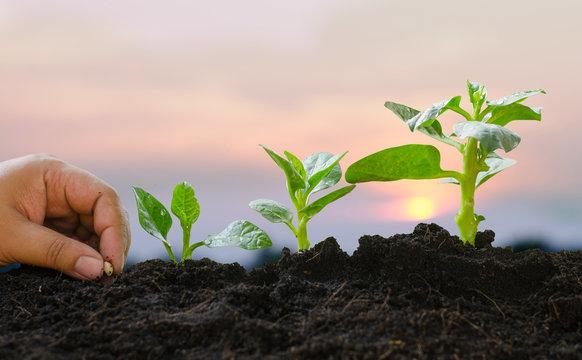 Plant Growing concept