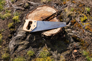 Used hand saw on top of tree stump
