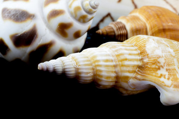 Sea shells on black background