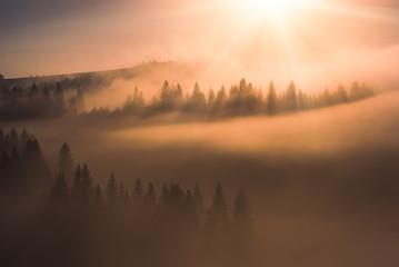 The gold light of sunrise