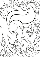Coloring page. Little cute squirrel stands on the bunch of the oak tree and smiles.
