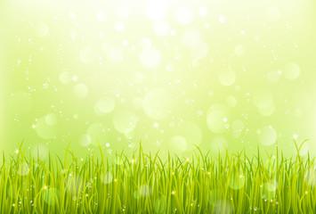 春 草 芝生 背景