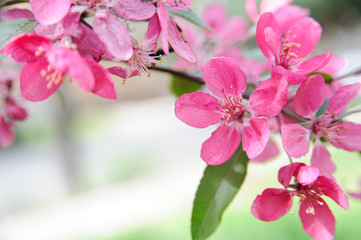 Blooming tree background