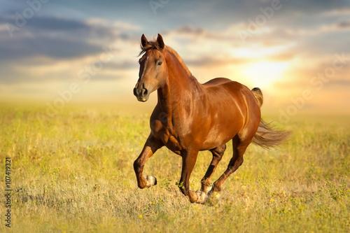 Red horse  run against sunset sky