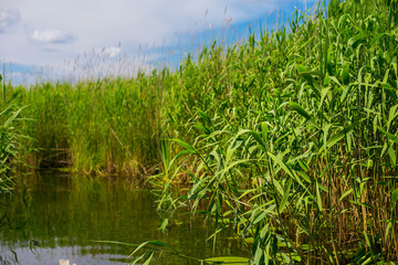 Green lake and the green cane