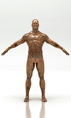 Busto, Anatomia Umana, Scultura