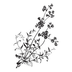 Botanical hand drawn branches with flowers isolated, herbal flowers isolated on white background vector illustration