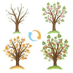 Wall Mural - Apple tree seasonal cycle