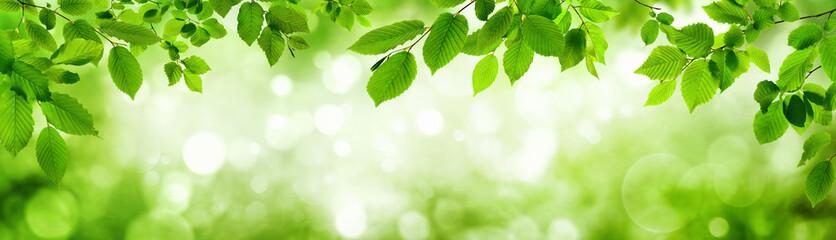 Wall Mural - Grüne Blätter und leuchtender Panorama Hintergrund bilden Rahm