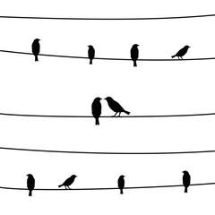 Birds on wires4