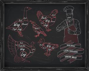beautiful scheme cutting chicken turkey duck goose quail with ch