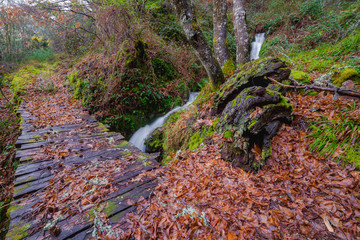 old path beside the stream