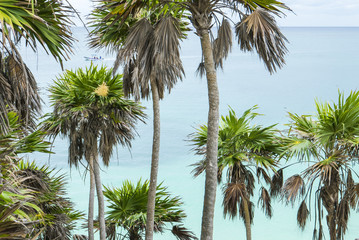 palm tree on a tropical beach in yucatan mexico