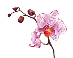 Pink orchid blossom