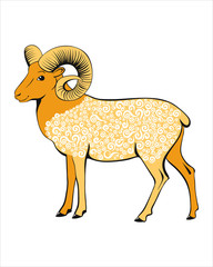 Beautiful sheep. Wild screw-horned sheep