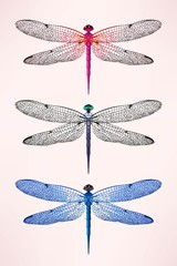 Set of dragonflies