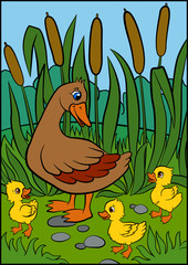 Color pictures: birds. Mother duck walks with her little cute ducklings. They are smile and happy.
