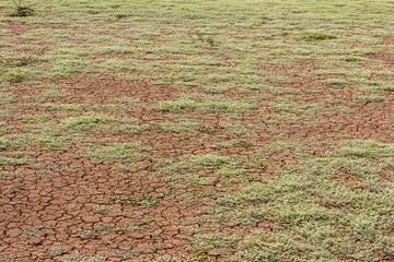 Background barren ground.