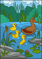 Color pictures: birds. Mother duck swims with her three little cute ducklings in the pond. They are smile and happy.
