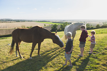 Caucasian brothers feeding horses in rural field