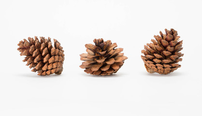 various coniferous cones trees isolated on white background