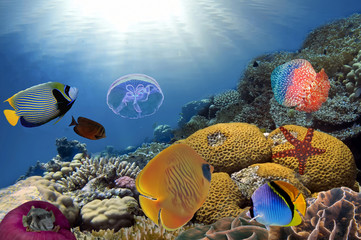 Colorful reef underwater landscape with fishes