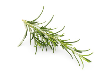Rosemary twig on the isolated white background.