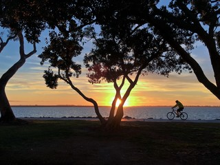 Sunset Silhouette of a man riding a bicyle along waterfront