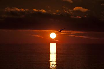 sunrise in the sea  whit seagull