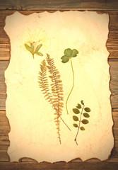 summer plants herbarium