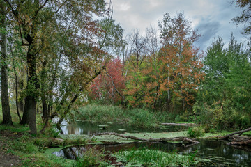The river among the trees in autumn