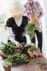 Older Caucasian couple harvesting vegetables from garden