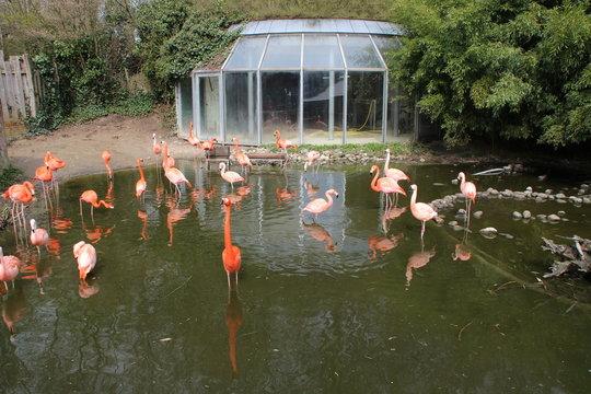 Ein Flamingo Gehege