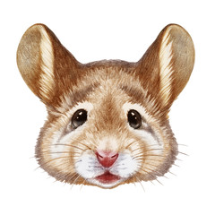 Portrait of Mouse. Hand-drawn illustration, digitally colored.