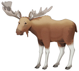 Cartoon animal - moose - isolated - illustration for children