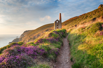 Fototapete - Summer on the Coast Path