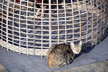 cat sitting infront of fighting cock cage.